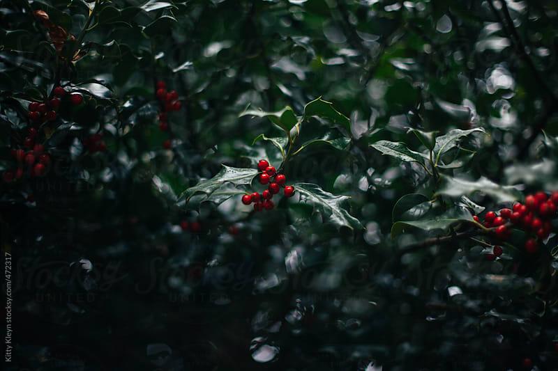 Holly forest by Kitty Kleyn for Stocksy United