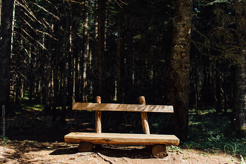 Bench in front of the forest by Boris Jovanovic for Stocksy United