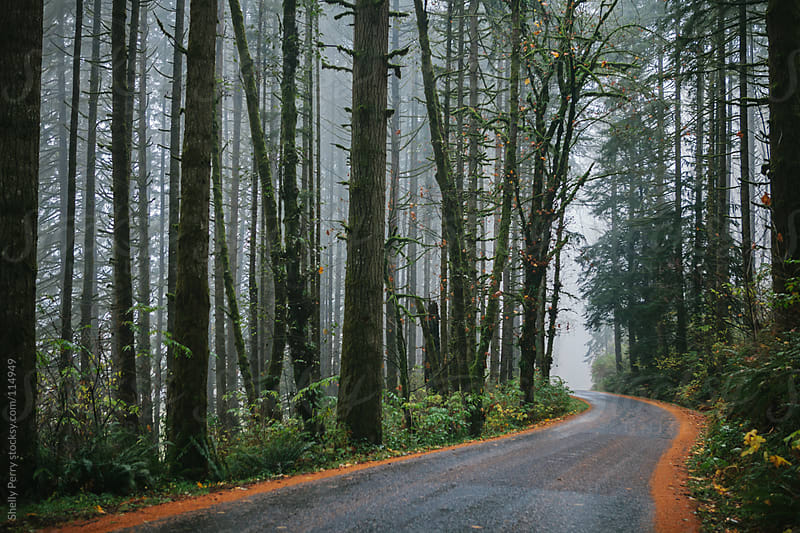 Foggy road through trees by Shelly Perry for Stocksy United