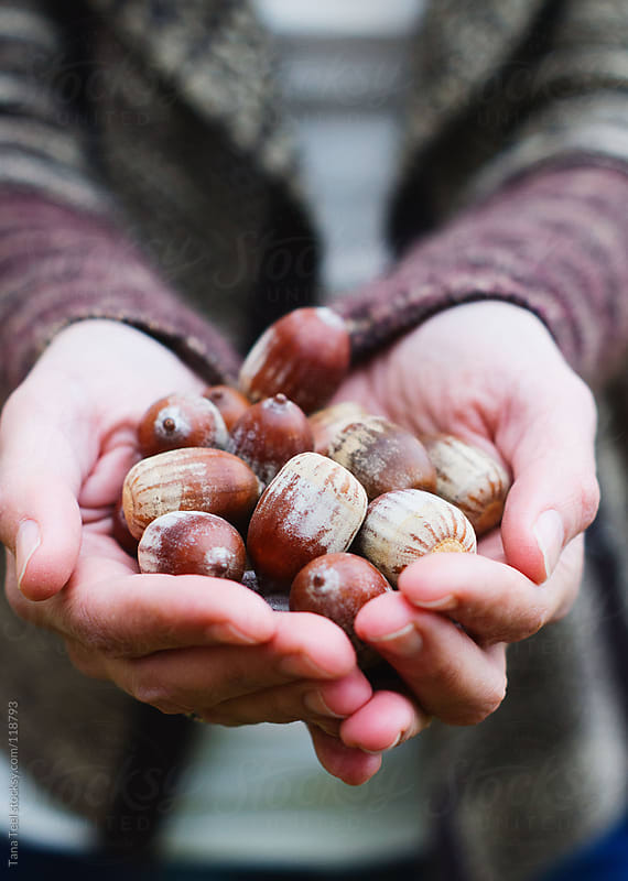 A woman holds handful of acorns fallen from a tree by Tana Teel for Stocksy United