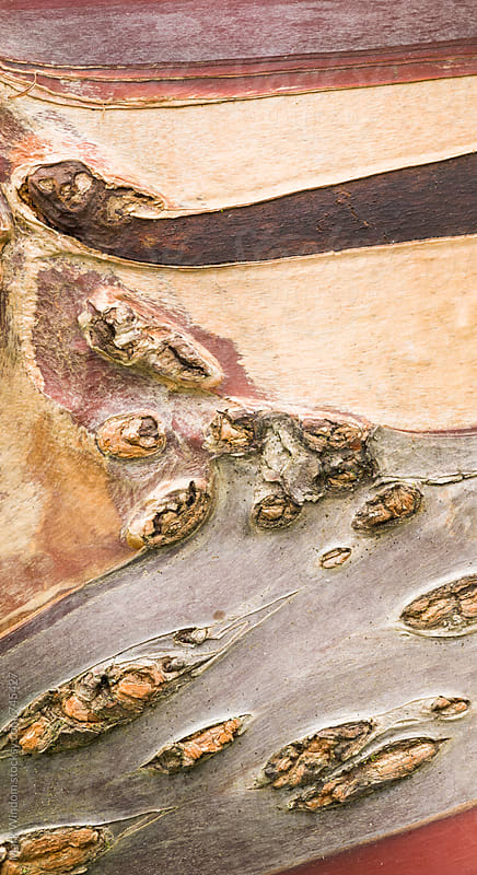 Cherry tree bark patterns, closeup by Mark Windom for Stocksy United