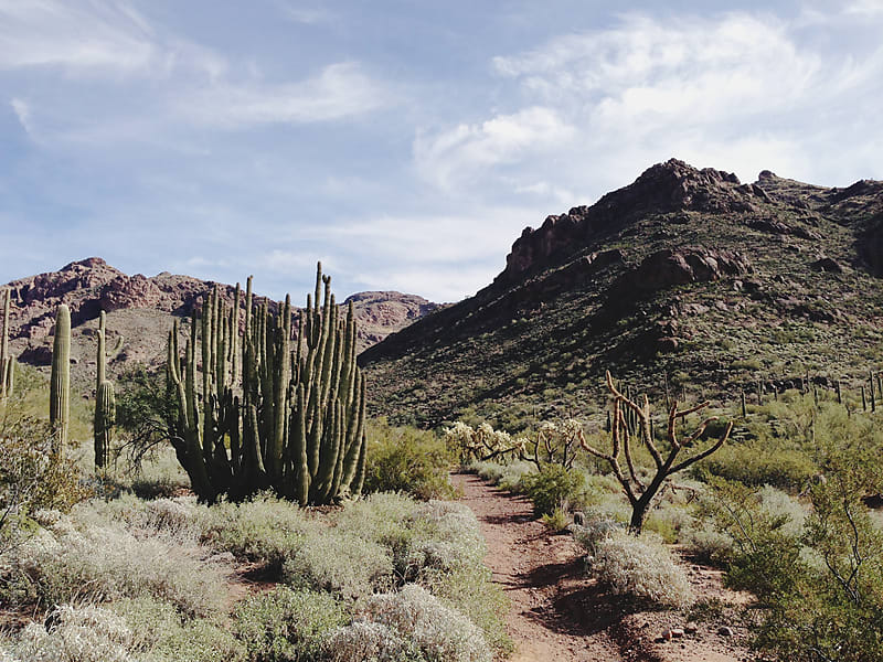 Organ Pipe Cactus Trail by Kevin Russ for Stocksy United