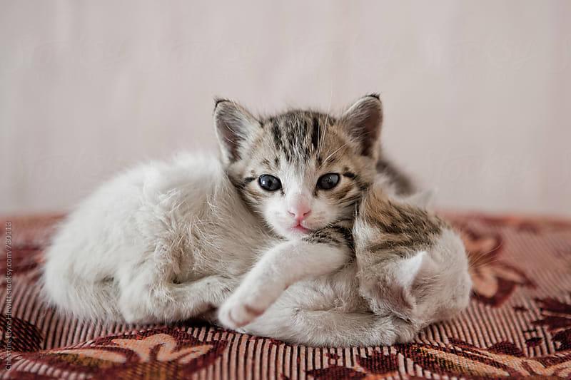 Kittens by Christine Love Hewitt for Stocksy United