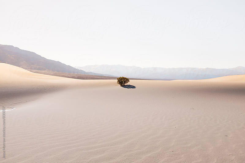 single bush tree in desert landscape by Jesse Morrow for Stocksy United