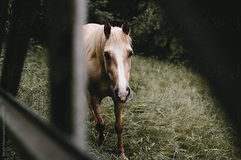 horse in a field on an overcast day by Nicole Mason for Stocksy United