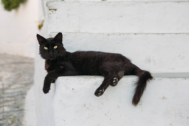 Black cat on white stairs by Alberto Bogo for Stocksy United