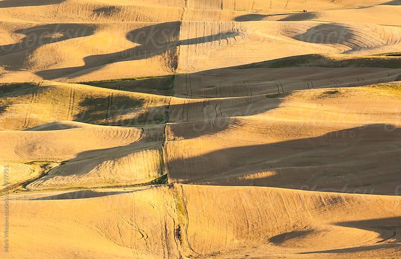 Ripe summer wheat fields by Mark Windom for Stocksy United