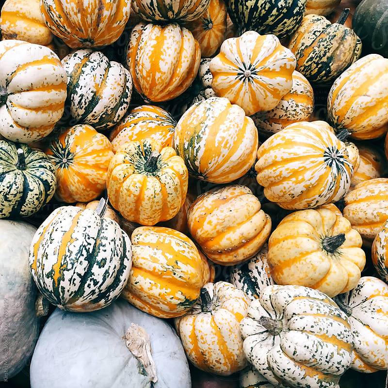 Pumpkins by Kirstin Mckee for Stocksy United
