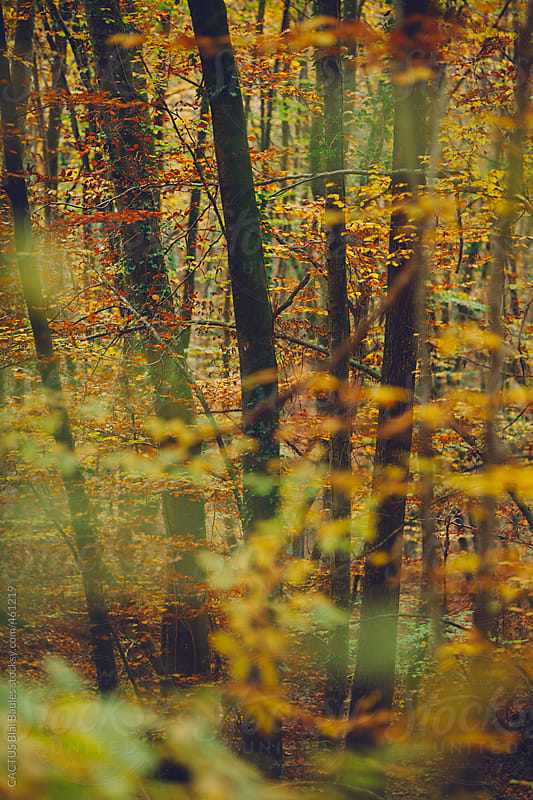 Autumn scene in a beech forest by CACTUS Blai Baules for Stocksy United