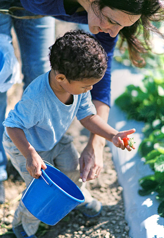 Mother and son picking strawberries by Marlon Richardson for Stocksy United