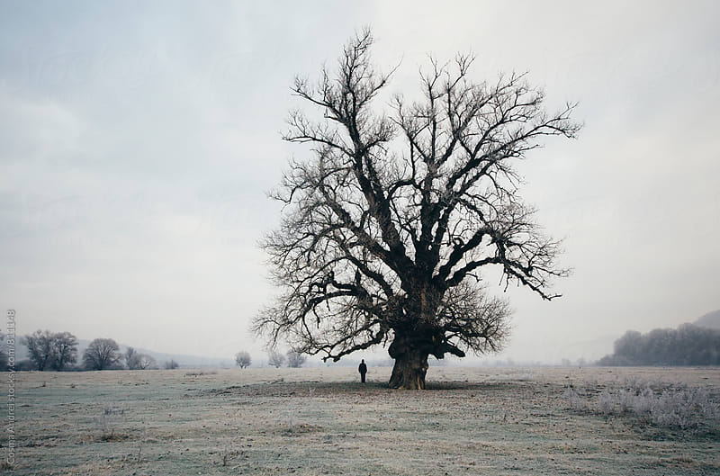 Man under giant tree on frozen meadow in morning by Cosma Andrei for Stocksy United