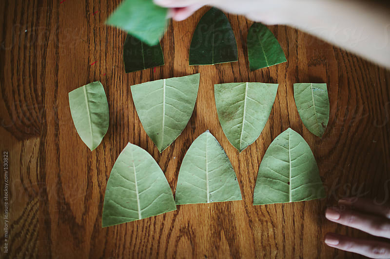 Organizing Leaves by luke + mallory leasure for Stocksy United