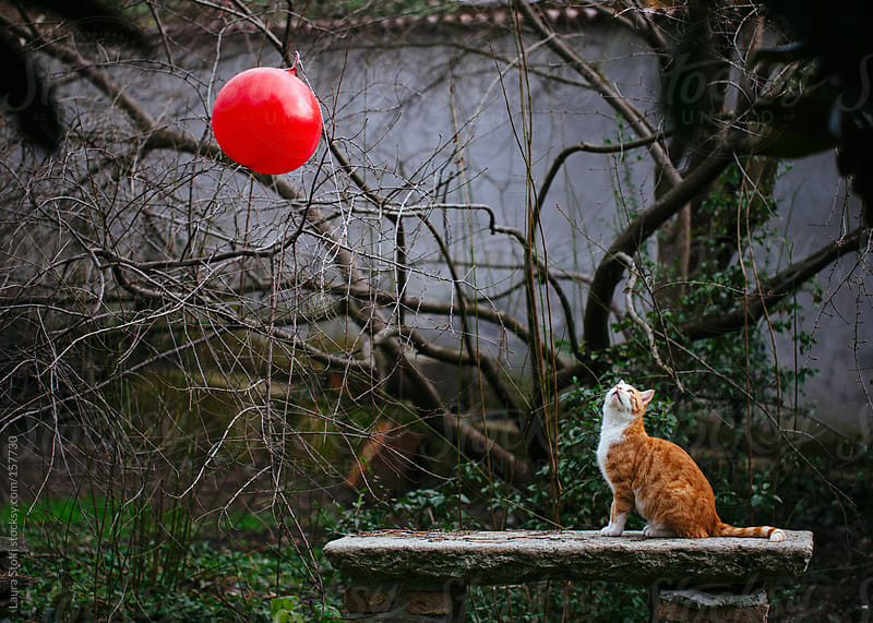 Red balloon and looking up cat by Laura Stolfi for Stocksy United