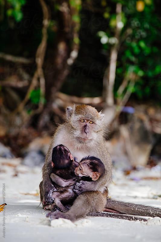 Monkey mother hugging her kids by Andrey Pavlov for Stocksy United