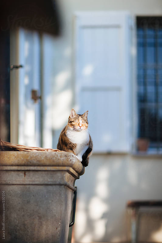 Tabby cat bathing in the sun with eyes closed and blissful look by Laura Stolfi for Stocksy United