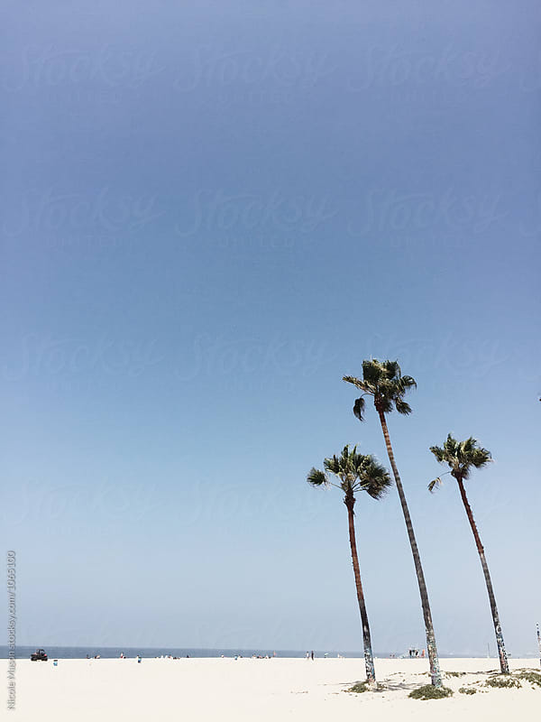 palm trees on beach on sunny day by Nicole Mason for Stocksy United