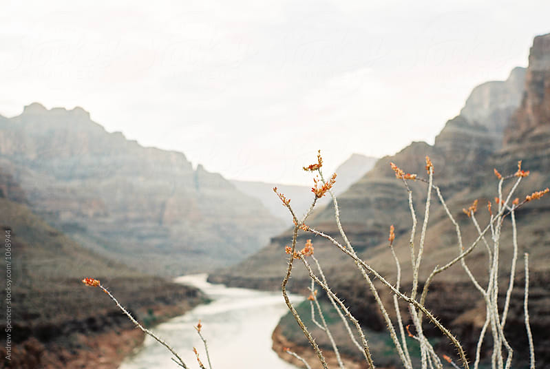 Grand Canyon by Andrew Spencer for Stocksy United
