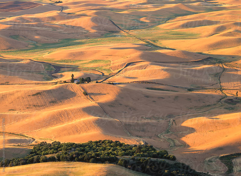 Palouse farmland in summer by Mark Windom for Stocksy United