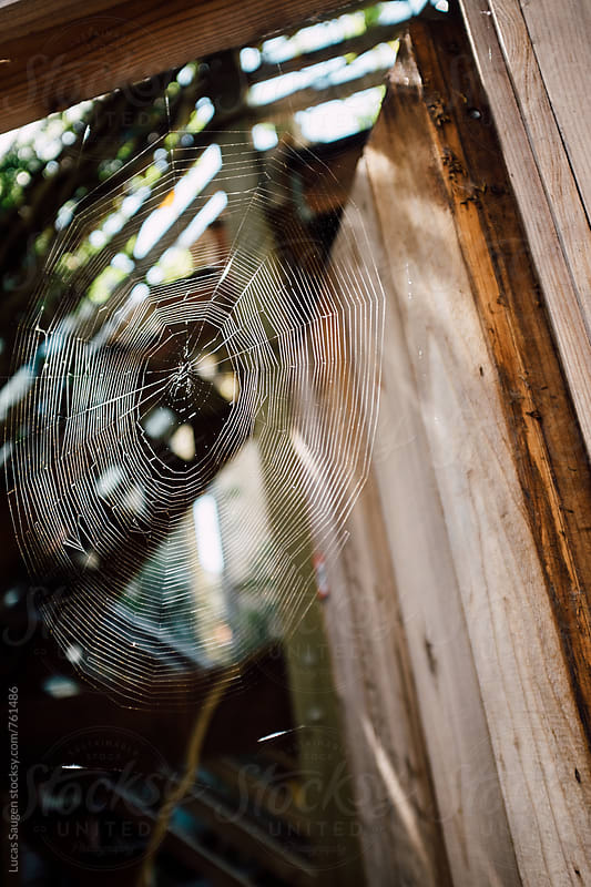 Dew covered spider web in an outdoor doorway. by Lucas Saugen for Stocksy United