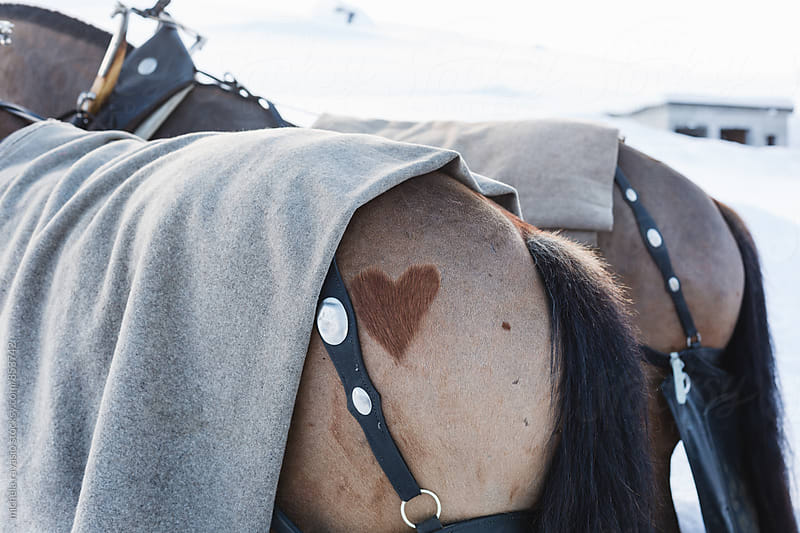 A heart shape on the back of the horse by michela ravasio for Stocksy United