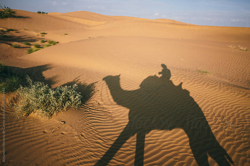 Tourist riding camel on desert dunes. Shadow - silhouette on sand by Alejandro Moreno de Carlos for Stocksy United