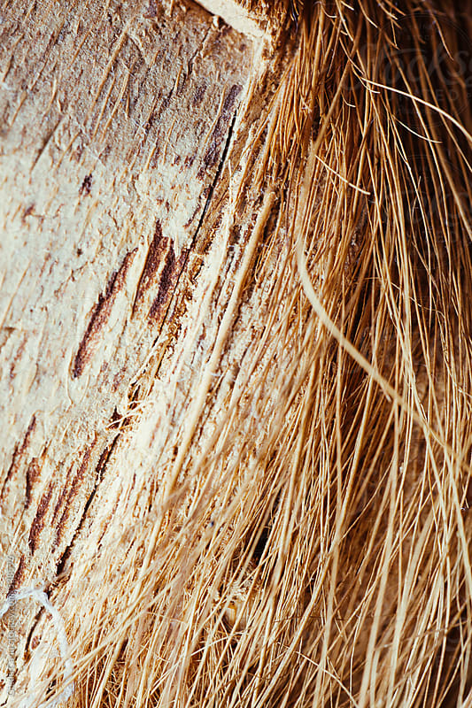 Dried grass background by Giada Canu for Stocksy United