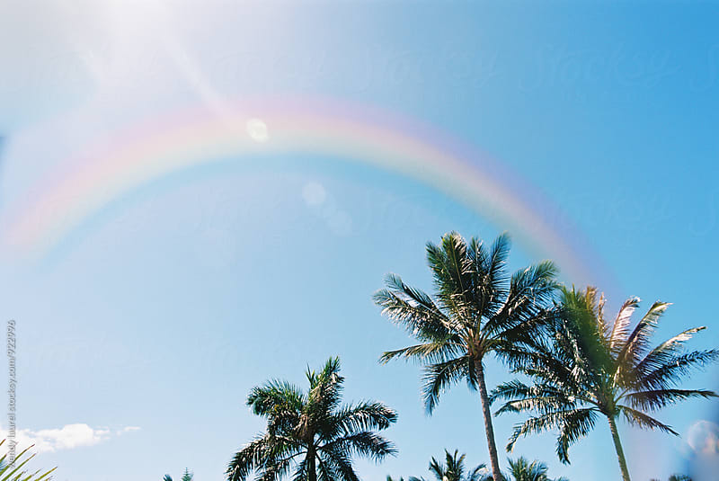 rainbow over blue sky and palm trees by wendy laurel for Stocksy United