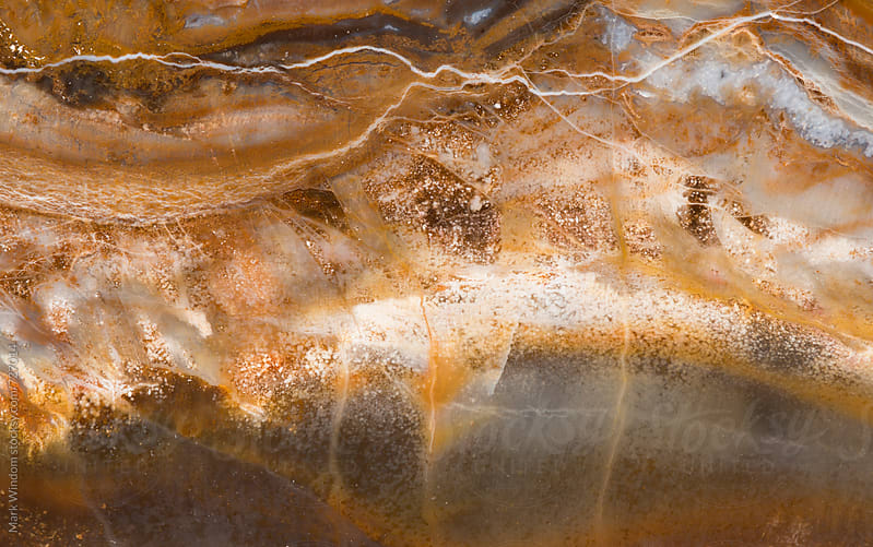 Petrified wood abstract, closeup by Mark Windom for Stocksy United