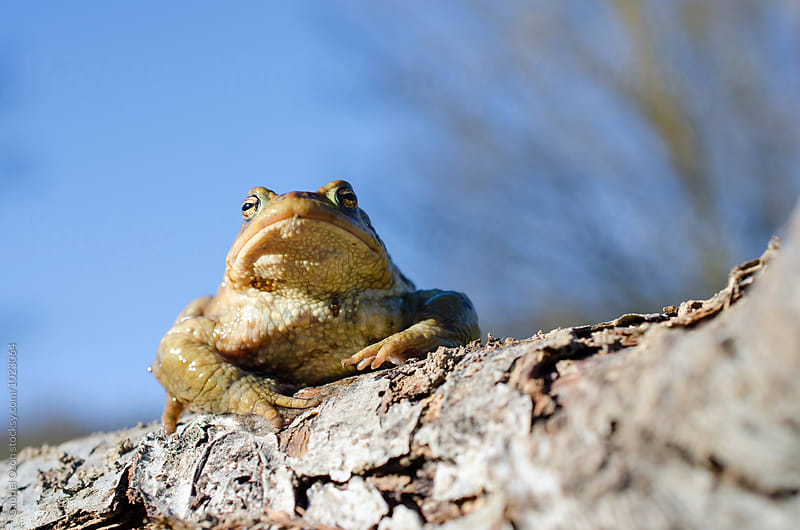 Toad by Gabriel Ozon for Stocksy United