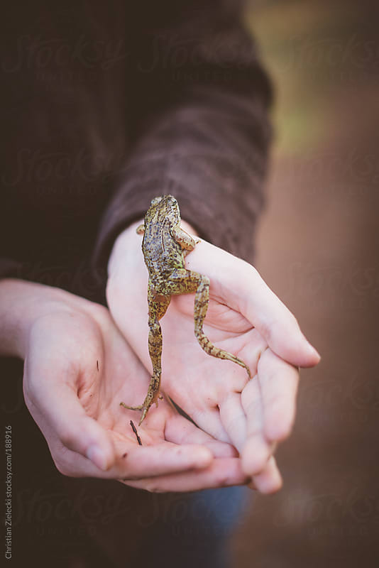 Holding a frog in the hands by Christian Zielecki for Stocksy United