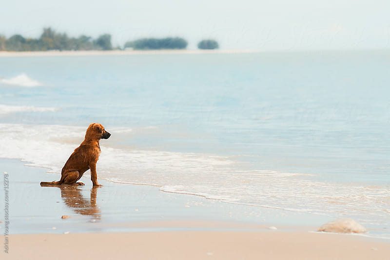 Dog in Expectation by Adrian P Young for Stocksy United