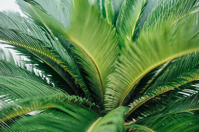 Palm leaves close up shot by Boris Jovanovic for Stocksy United