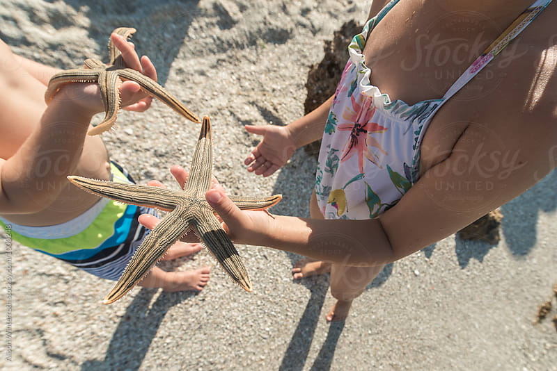 Children Examine The Animals They Caught At The Beach by Alison Winterroth for Stocksy United