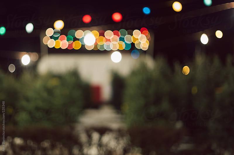 A christmas tree lot by Ania Boniecka for Stocksy United