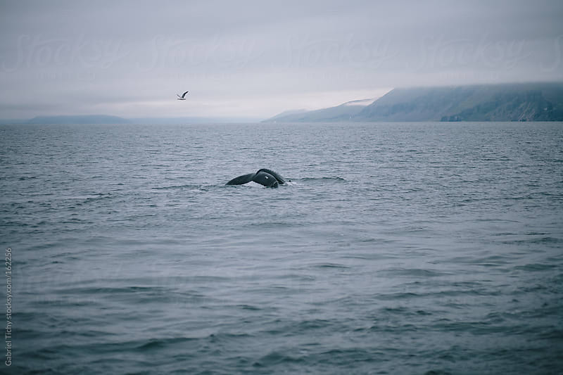 Humpback whale's tail and a bird by Gabriel Tichy for Stocksy United