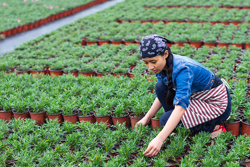 one young asian woman working in the Nursery by Bo Bo for Stocksy United