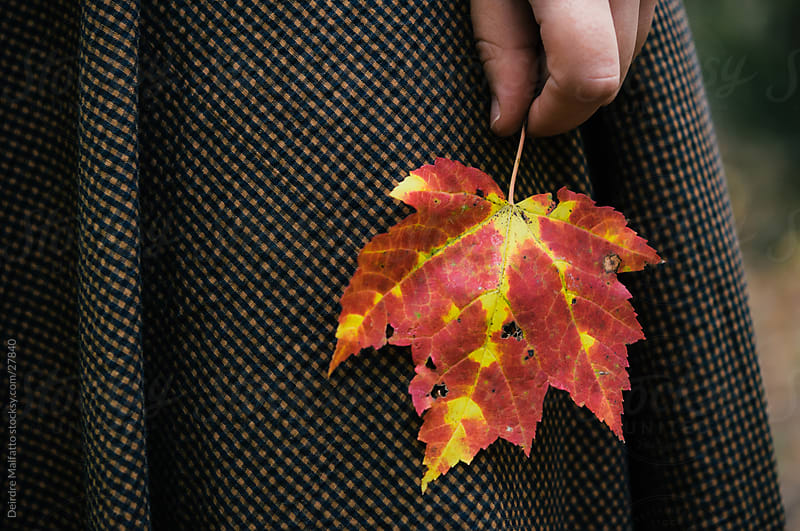 Hand Holding a Maple Leaf by Deirdre Malfatto for Stocksy United