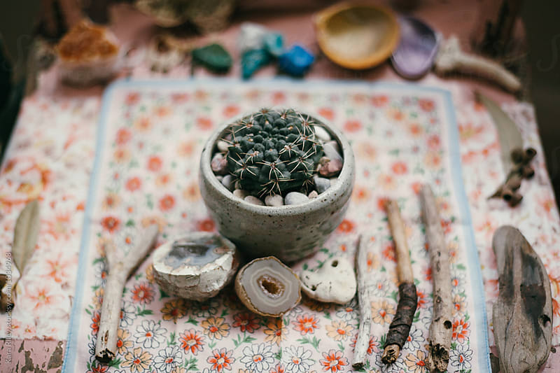 A collection of eclectic natural objects in a shrine by Kara Riley for Stocksy United