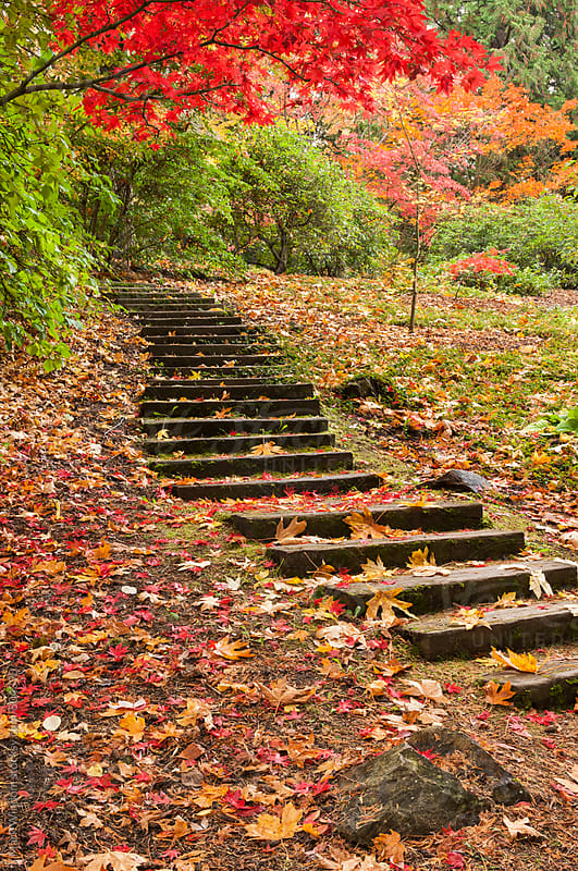 Arboretum steps in Autumn by Mark Windom for Stocksy United