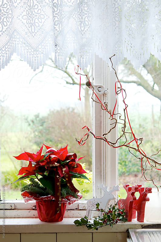 Window sill of a kitchen with Christmas decoration by Harald Walker for Stocksy United