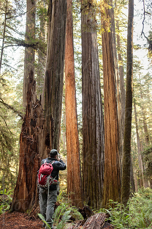Photograping Redwoods by Aubrie LeGault for Stocksy United