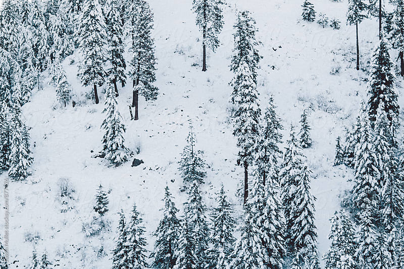 Snow covered pine trees on a mountain side by Justin Mullet for Stocksy United