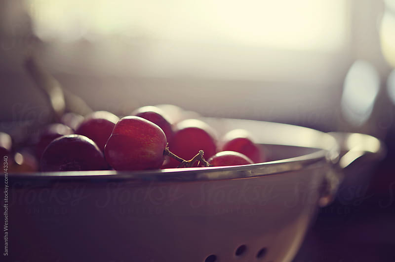fresh grapes by Samantha Wesselhoft for Stocksy United