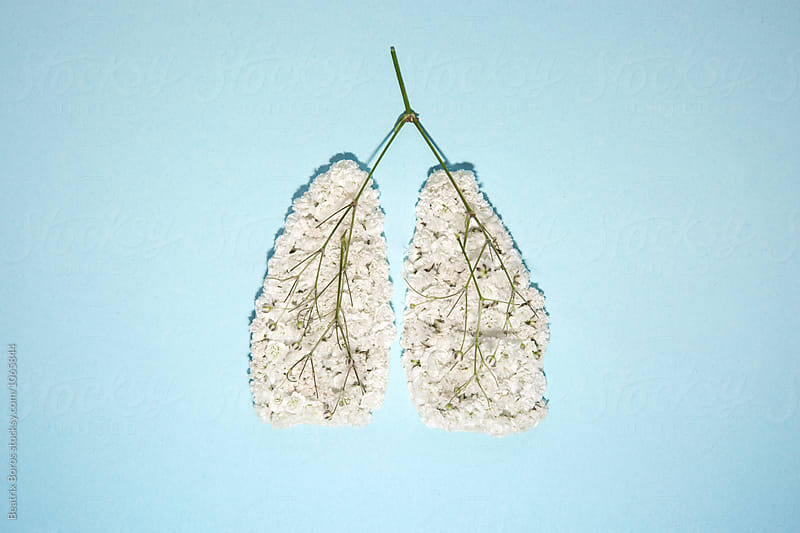 Alternative medicine concept: Human lungs veins and artery made of flowers by Beatrix Boros for Stocksy United