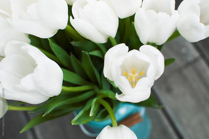 White Tulips by Alie Lengyelova for Stocksy United