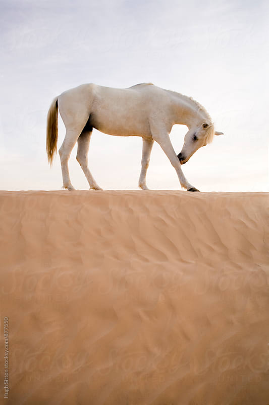 Horse in the Sahara Desert.  by Hugh Sitton for Stocksy United