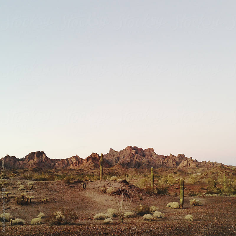 Desert Landscape with Cactus by Kevin Russ for Stocksy United