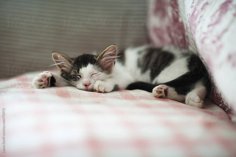 Young kitty cat sleeping on sofa on flowered quilt by Laura Stolfi for Stocksy United