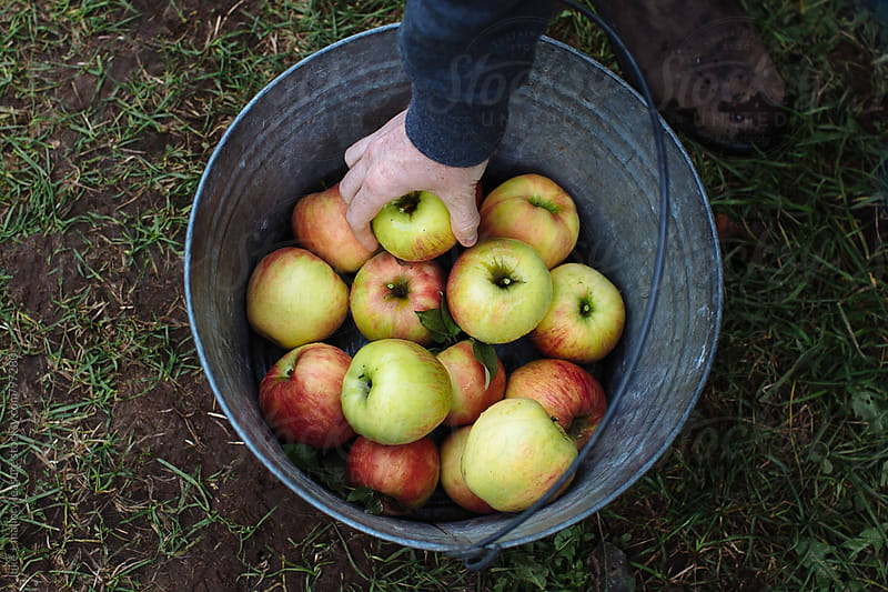 Apple Picking by luke + mallory leasure for Stocksy United