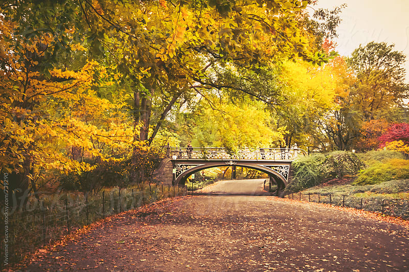 Autumn - Central Park - New York City by Vivienne Gucwa for Stocksy United